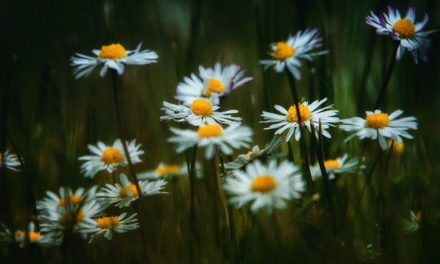 Tips Memilih Papan Bunga Duka Cita