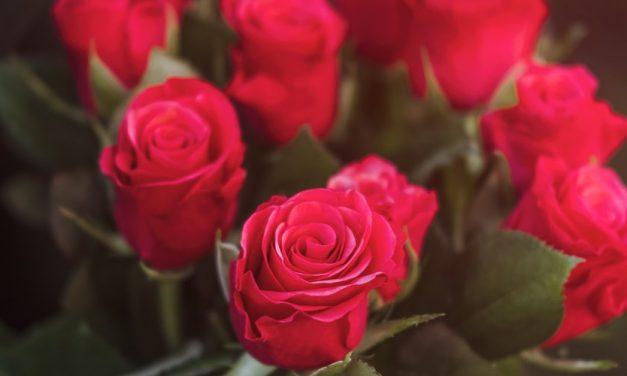 Jenis Bunga Valentine Terpopuler