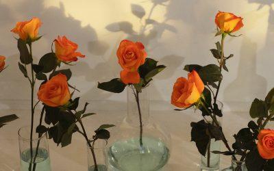 Cara Menanam Bunga untuk Pemula