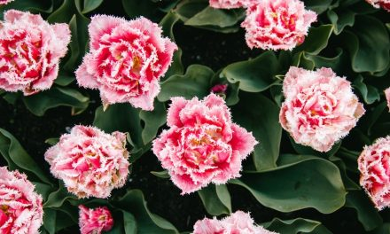 Jenis Bunga Hias Gantung