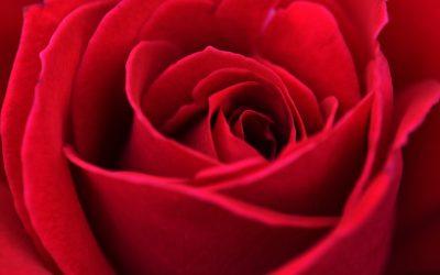 Bunga Yang Bermanfaat Untuk Kesehatan
