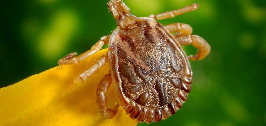 Waspada 5 Parasit yang kerap Menyerang Anak