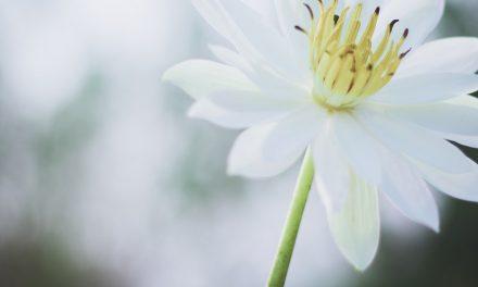Bunga Yang Bermanfaat Bagi Kesehatan