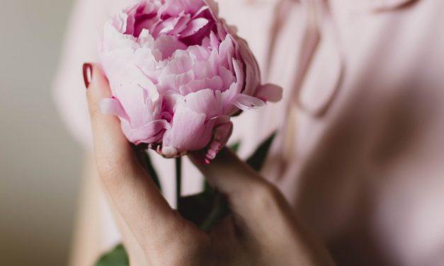 Kisah dibalik Keindahan Bunga Poinsettia